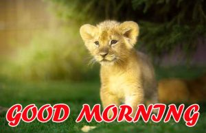 Cute Good Morning Pictures Images Wallpaper HD For Whatsapp
