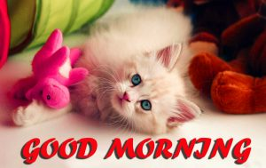 Cute Good Morning Wallpaper Photo For Best Friend
