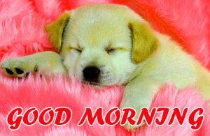 Cute Good Morning Pictures Photo Images HD For Facebook