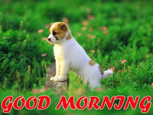 Cute Good Morning Wallpaper Photo Images Free HD