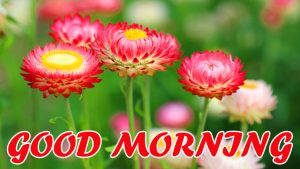 Cute Good Morning Images Pictures Photo Download For Wallpaper