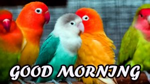 Cute Good Morning Wallpaper Photo Pictures HD