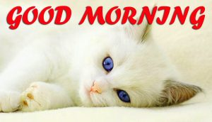 Cute Good Morning Wallpaper Photo Images Download