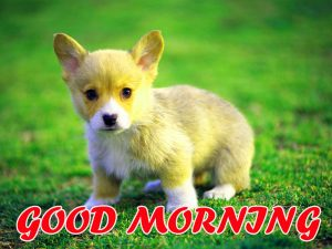 Cute Good Morning Images Pictures Photo Free HD