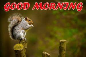 Cute Good Morning Pictures Images Photo HD For Faceook