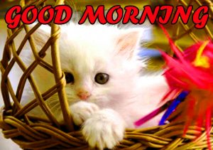 Cute Good Morning Wallpaper Photo Images HD