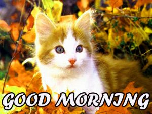 Cute Good Morning Pictures Images Photo Download