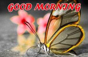 Cute Good Morning Pictures Images Photo HD For Facebook
