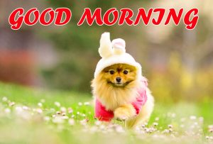 Cute Good Morning Pictures Images Photo HD