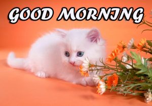 Cute Good Morning Pictures Images Photo Wallpaper HD