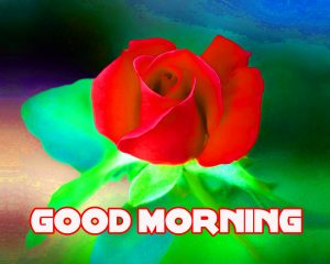 Flower Rose Good Morning Images Wallpaper Pics Download for Whatsaap