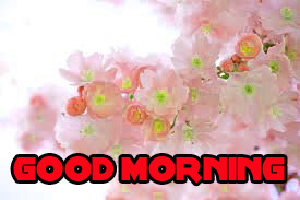 Good Morning Images Wallpaper Pics With Flower IN hd