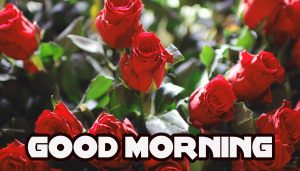 Good Morning Images Wallpaper pic With Red Rose