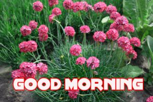 Good Morning Images Wallpaper pics HD Download With Flower
