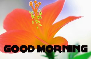 Good Morning Images Pictures Wallpaper Download With Flower