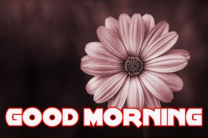 Good Morning Images Photo Wallpaper Pics With Flower Download for Whatsaap