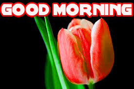 Good Morning Images Wallpaper Pics Free Download for Facebook