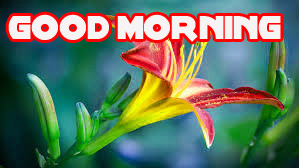 Good Morning Images Wallpaper Pics Download for Whatsaap