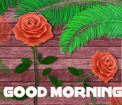 Good Morning Images Wallpaper Pics Download for Whatsaap With Flower