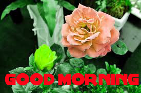 Good Morning Images Wallpaper Pics Download With Flower