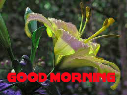Good Morning Images Photo Wallpaper Download for Whatsaap