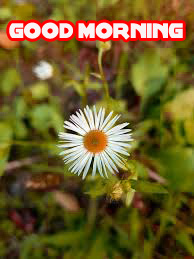 Good Morning Images Pics Wallpaper free Download