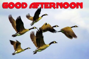 Good Afternoon Photo Images Pics HD