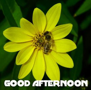 Good Afternoon Pics Photo Images Download