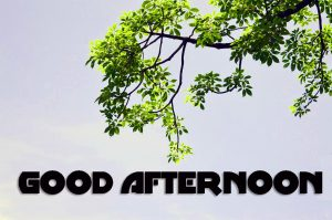Good Afternoon Pics Photo Images HD