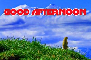 Good Afternoon Images Photo Wallpaper HD