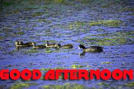 Good Afternoon Pictures Photo Images Download For Facebook