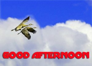 Good Afternoon Pictures Photo Images HD Download