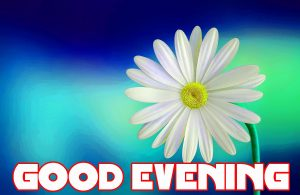 Good Evening Photo Images Pics HD Download