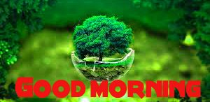 Good Morning Images Wallpaper Pics With Nature Download