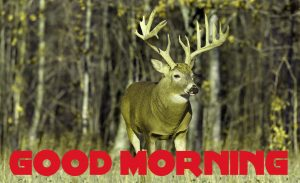Good Morning Images Wallpaper Photo Pics HD Download With Animal