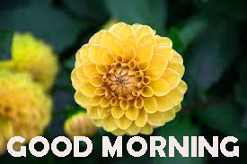 Good Morning Images Photo Pictures HD Download For Whatsapp