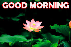 Good Morning Photo Wallpaper Pictures Free HD