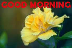 Good Morning Photo Images Wallpaper Download For Facebook