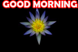 Good Morning Images Photo Pictures HD With Flower