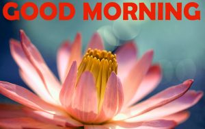 Good Morning Photo Pics Images HD Download For Whatsapp