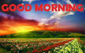 Good Morning Pictures Photo Images HD