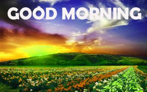 Good Morning Photo Wallpaper Pics Download