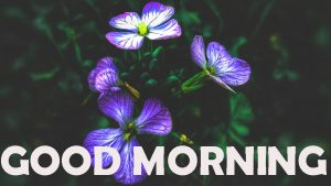 Good Morning Images Wallpaper Download For Facebook