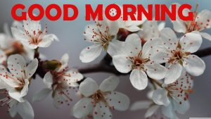 Good Morning Photo Images Wallpaper Download