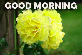 Good Morning Pictures Photo Images Download