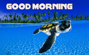 Good Morning Wishes Images Photo HD Download