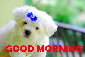 Good Morning Pictures Photo Wallpaper Download For Whatsapp