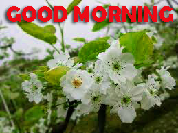 Good Morning Pics Photo Images HD Download For Facebook