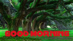 Good Morning Wishes Images Wallpaper Photo Download