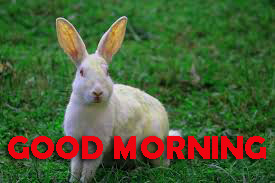 Good Morning Pictures Images Photo Free HD